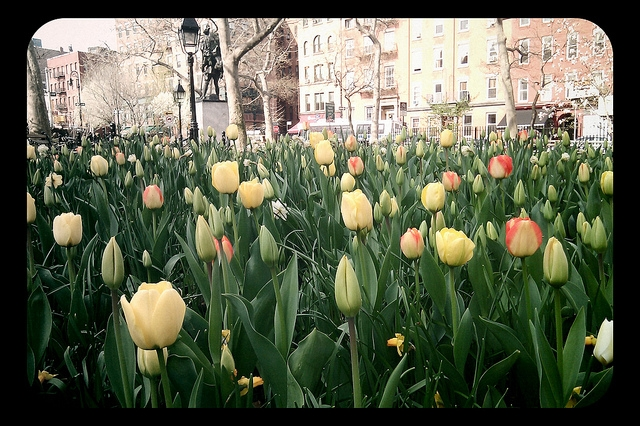 Seasonal tips for how to enjoy new york on a budget for Flowers union square nyc