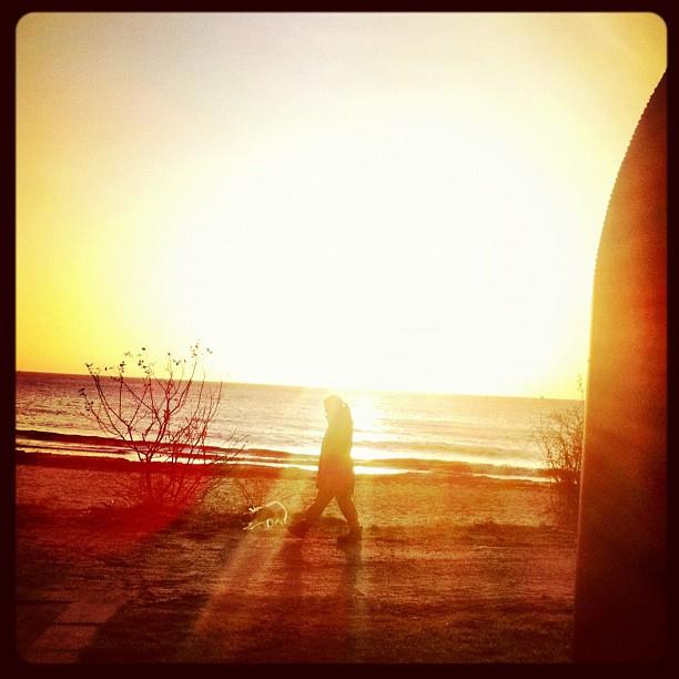 Walking the dog : Long sandy beach of Ystad
