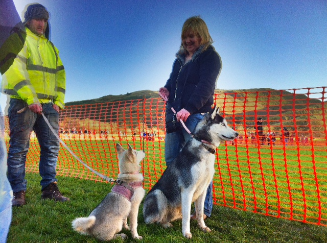 Hooray for Dogmanay: Beautiful Huskies at the event