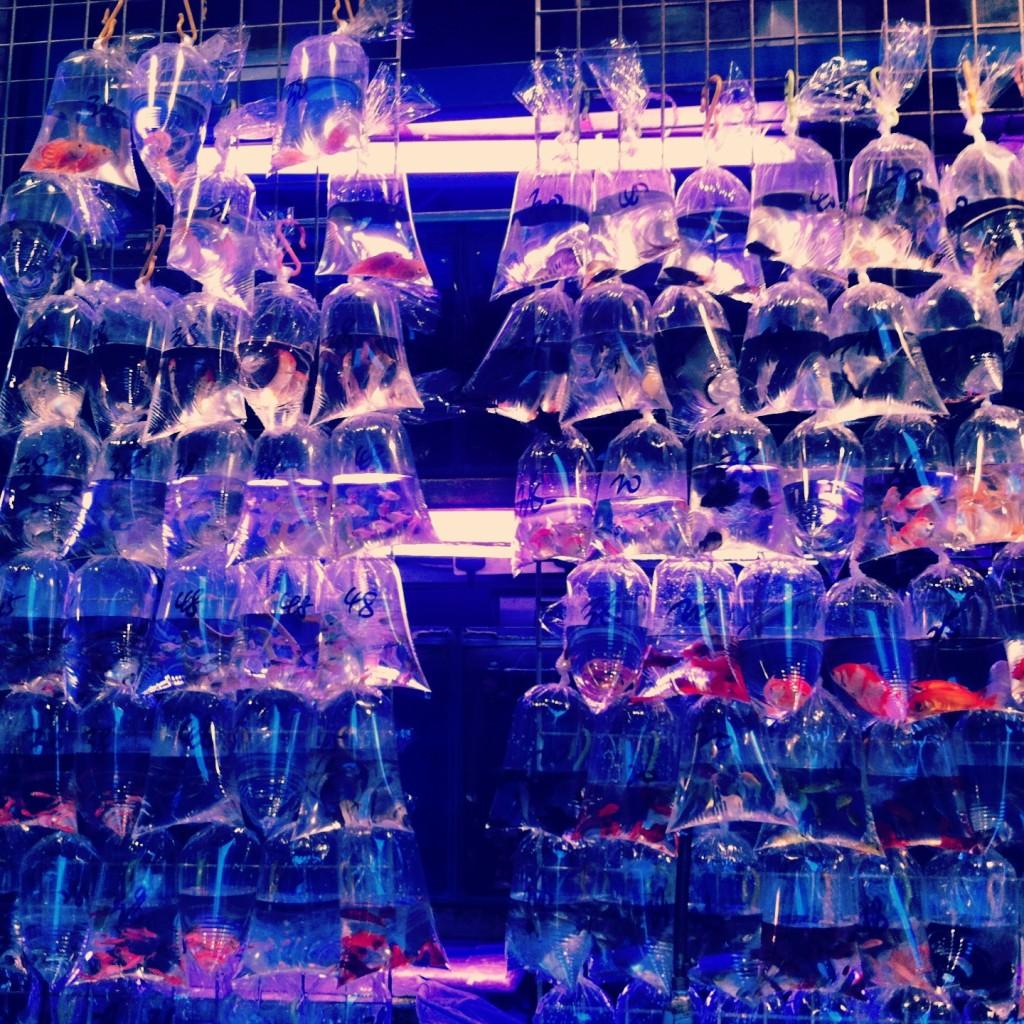 goldfish markt 2