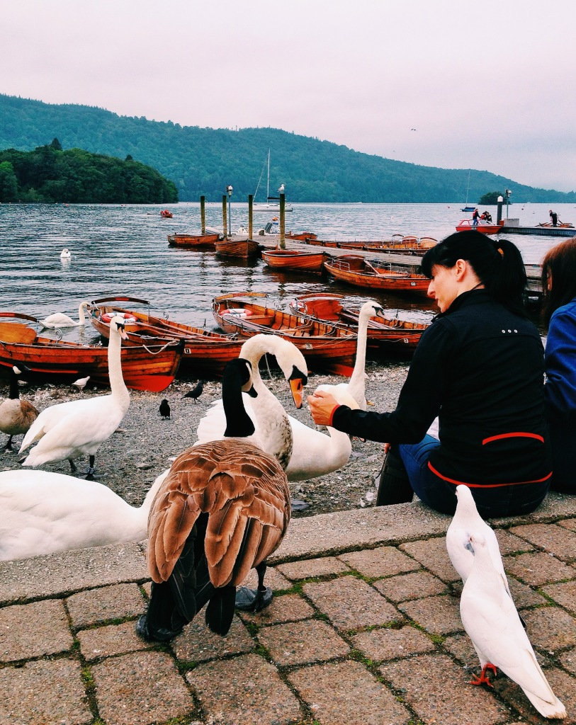 Feedings the swans and ducks at Bowness on Windermere