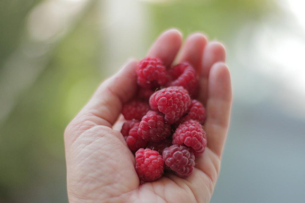 Serbia: Raspberry heaven!