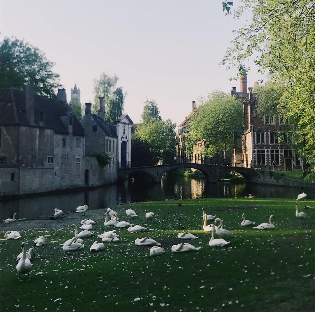 Swans Minnewater Lake
