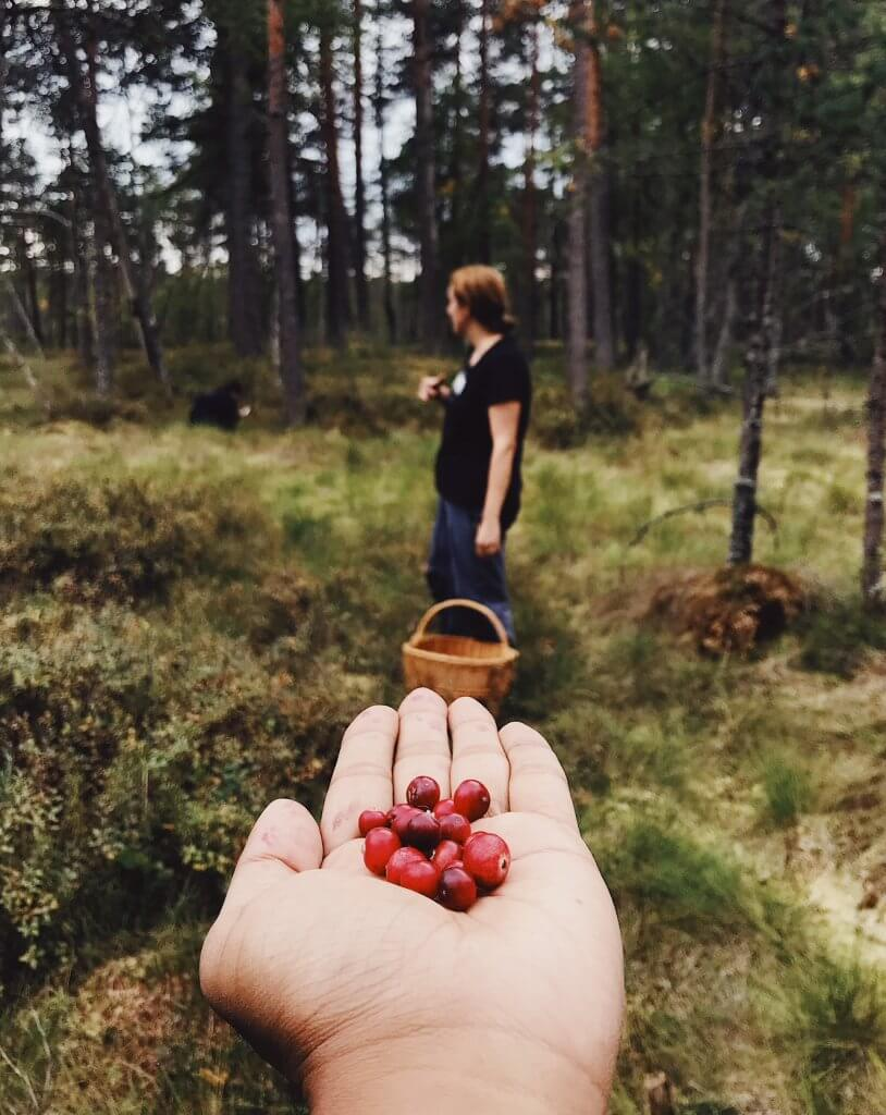 cranberry-fields-forever.